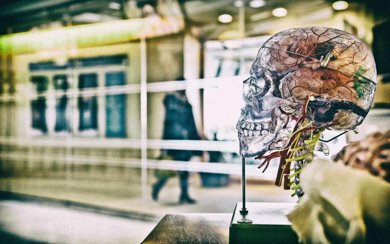 Studiare anatomia non è mai stato così semplice